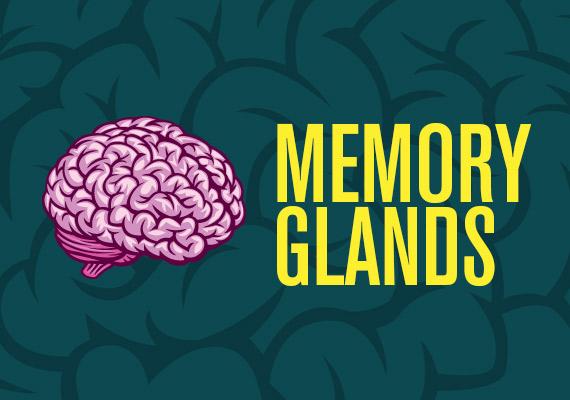 Memory Glands